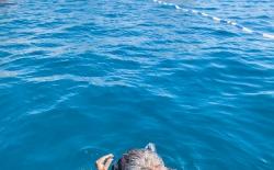 Κολύμπι μετ' εμποδίων_130