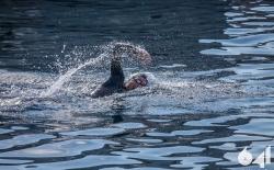 Προθέρμανση &  Κολύμβηση